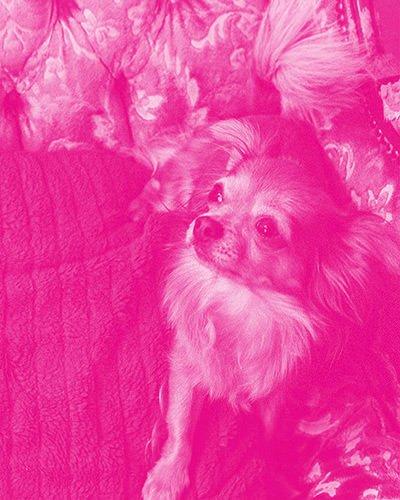 typischfotograf-rosarotebrille-080